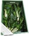 LOGO_Ein Sortiment mit je nach Saison unterschiedlicher Breite von 6 bis 12 verschiedenen Gemüsesorten aus der Bio-Züchtung.