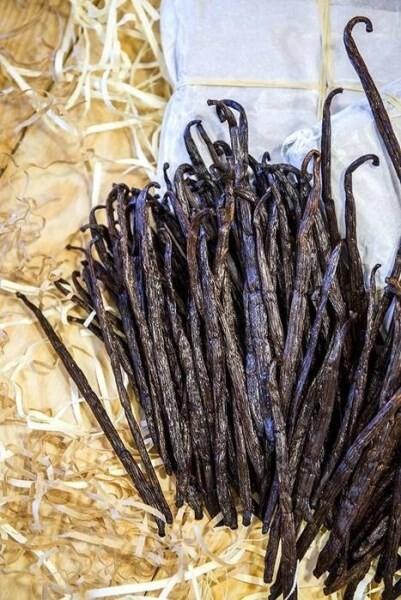 LOGO_Madagascar gourmet Planifolia vanilla beans