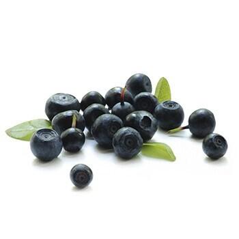 LOGO_Blaubeere (Vaccinium myrtillus)