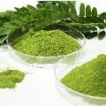LOGO_Moringa Oleifera Leaf Powder