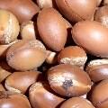 LOGO_Argania Spinosa Seed Oil