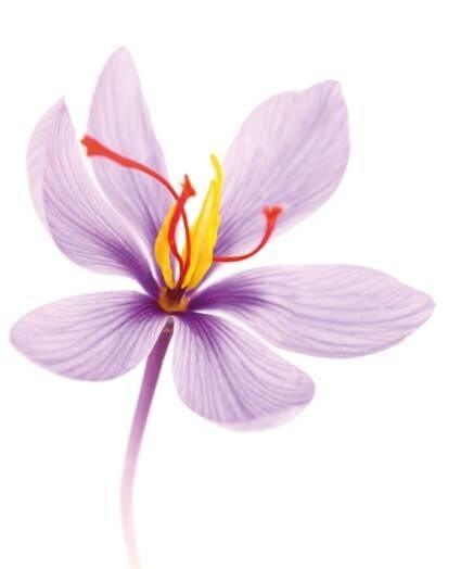LOGO_Organic saffron extract (5% crocins)