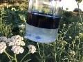LOGO_Achillea Millefolia Yarrow oil