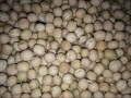 LOGO_Organic Peas