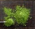 LOGO_100% Organic Premium Moringa Oleifera Leaf Powder
