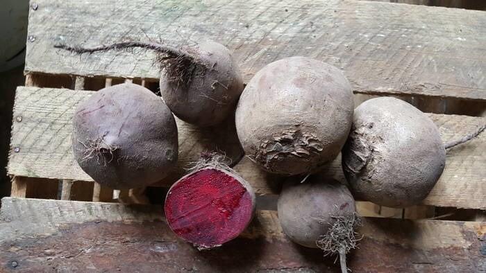 LOGO_ecological vegetables