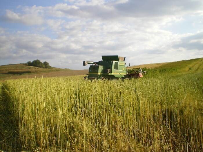 LOGO_hemp contract cultivation