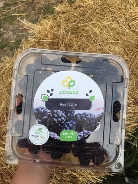 LOGO_Organic Fresh Blackberries