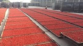 LOGO_Organic goji berry/goji berry(red)/wolfberry