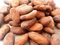 LOGO_BIO Cocoa beans