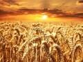 LOGO_Wheat