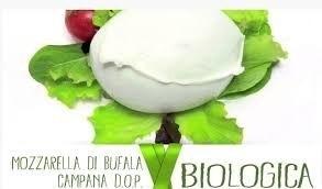 LOGO_Mozzarella di Bufala campana D.O.P. BIO