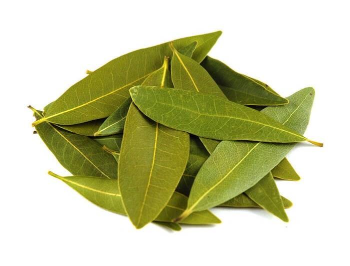LOGO_Herbs & Spices
