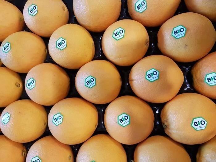 LOGO_Oranges