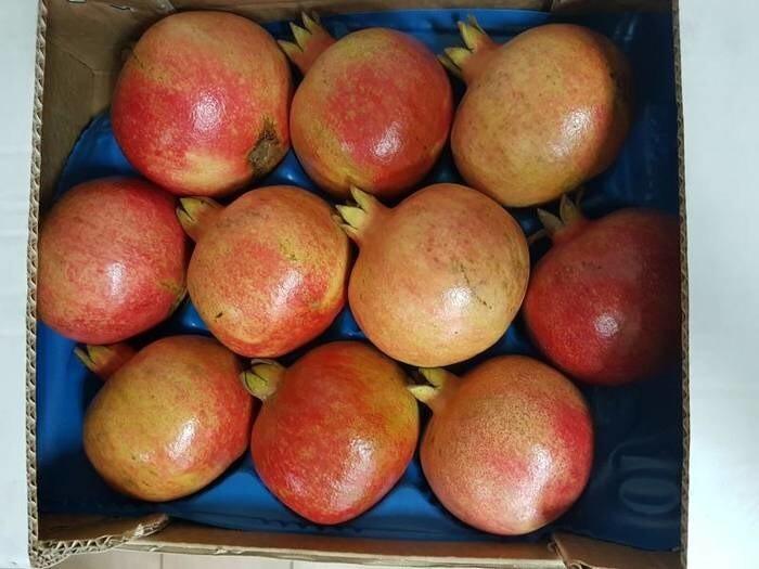 LOGO_Pomegranates