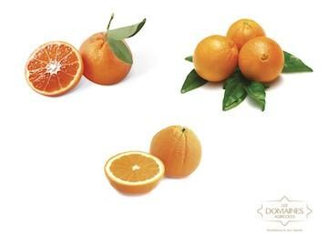 LOGO_Citrus fruits