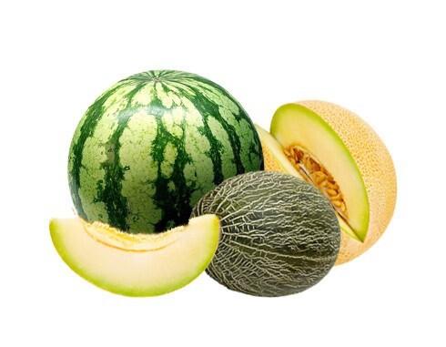 LOGO_Melon & Watermelon