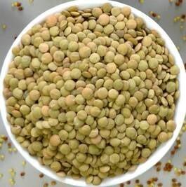 LOGO_Organic Lentil grain