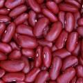 LOGO_ORGANIC DARK RED KIDNEY BEANS