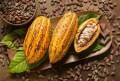LOGO_Kakao (Pulver, Butter und Paste)