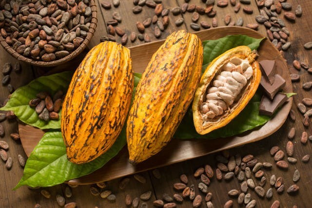LOGO_Cacao (powder, butter and paste)