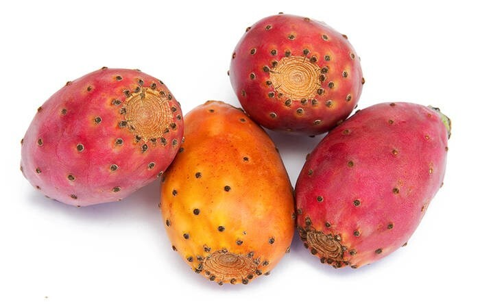 LOGO_Prickly Pear