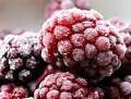 LOGO_Processing, packaging and distribution of frozen fruits
