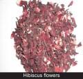 LOGO_Hibiscus flowers