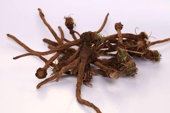 LOGO_Dandelion Roots