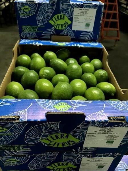 LOGO_Persian lime ( Citrus Latifolia )