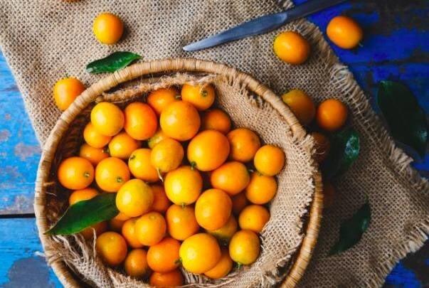 LOGO_Kumquat ( Fortunella )