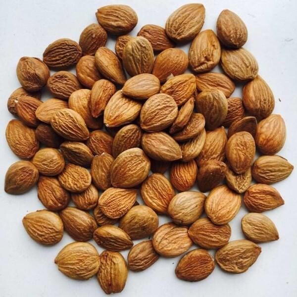 LOGO_Apricot kernels / plum kernels / sour cherry kernels