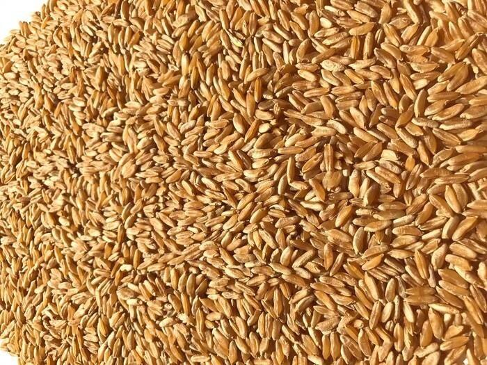 LOGO_Khorasan Santacandida® Wheat (raw and pearly)