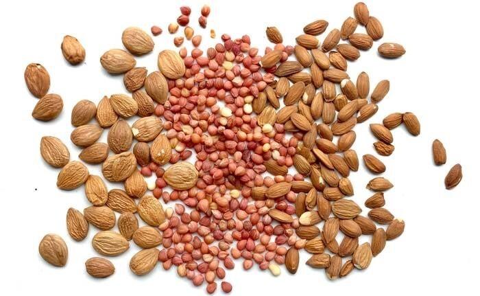 LOGO_apricot seeds, sour-cherry seeds, plum seeds