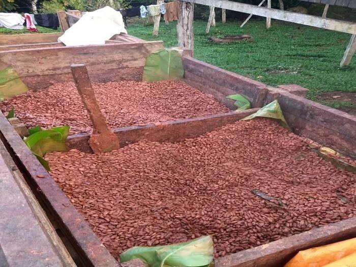 LOGO_Fermented Cocoa beans