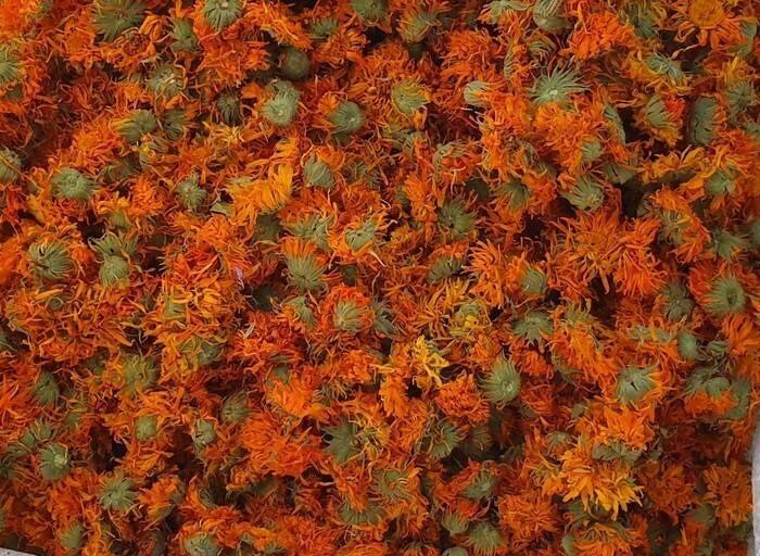 LOGO_Calendula Officinalis - Flores