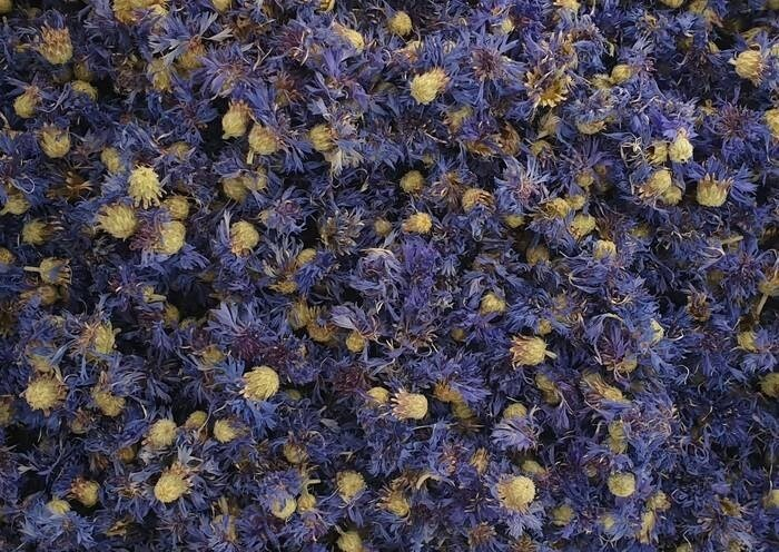 LOGO_Centaurea Cianus - Flores