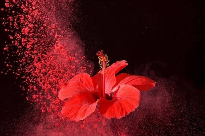 LOGO_Organic Hibiscus Extract Powder