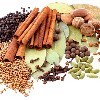 LOGO_Organic Ceylon Spices
