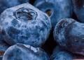 LOGO_Organic blueberry