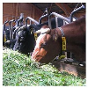 LOGO_Master Ökologische Landwirtschaft