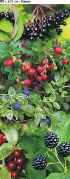 LOGO_Lingonberry Frozen Organic