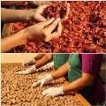 LOGO_Organic Nutmeg and Organic Mace
