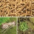 LOGO_Roots Crop