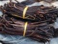LOGO_Organic vanilla beans