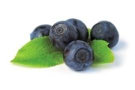 LOGO_Wild bilberry IQF