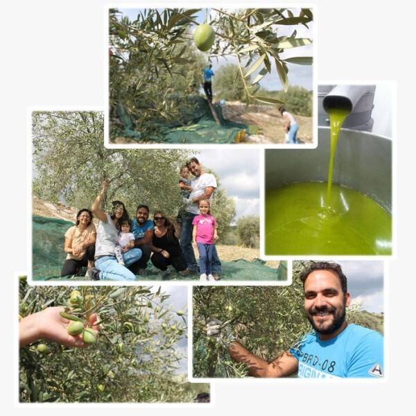 LOGO_DISCOVERING THE WORLD OF OLIVE OIL