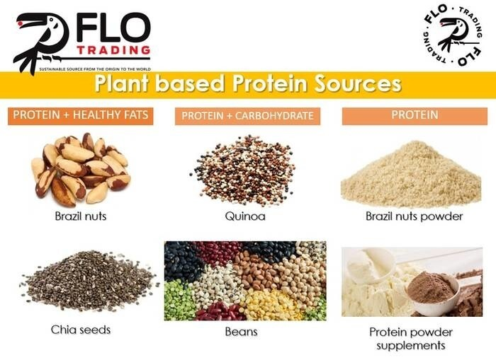 LOGO_PLANT-BASED PROTEIN SOURCES