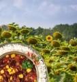 LOGO_Sonnenblumenhack - eine nachhaltige Alternative