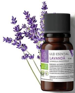 LOGO_Lavender – lavandula augustifolia